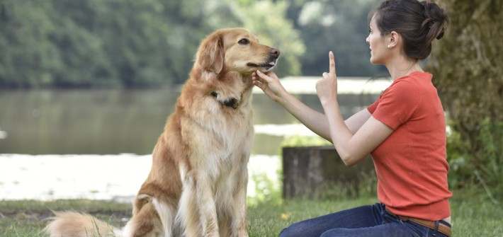 Hunde erziehen