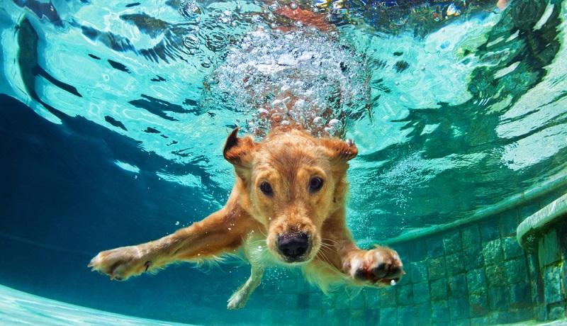 Ein aktiver Hund tollt herum und ist alles andere als wasserscheu. (#1)