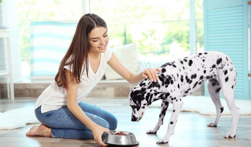 Ein gutes Futter ist unverzichtbar für das Wachstum und die Vitalität des Vierbeiners. (#3)