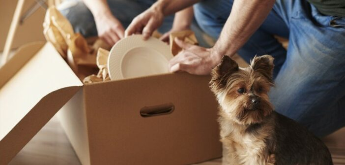 Hunde in der Mietwohnung
