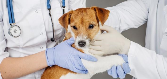 Wenn das Tier schnell zum Arzt muss