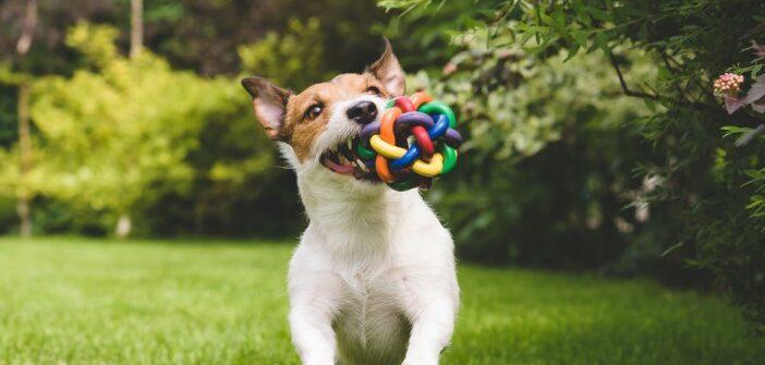 Tolles Hundespielzeug – einfach basteln oder günstig kaufen