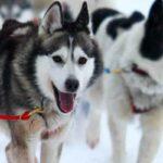 Checkliste: Hunde richtig füttern