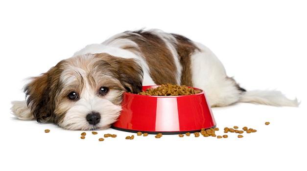 Ein gesundes Hundefutter sollte also ausreichend Proteine, Fette, gesunde Kohlenhydrate, Vitamine und Spurenelemente enthalten.