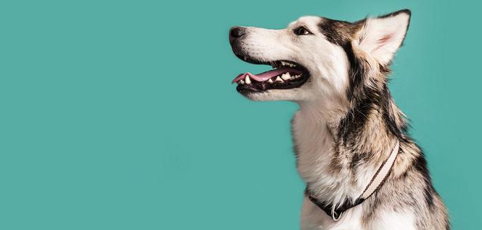 Gesunde Zähne: Beim Hund das A und O