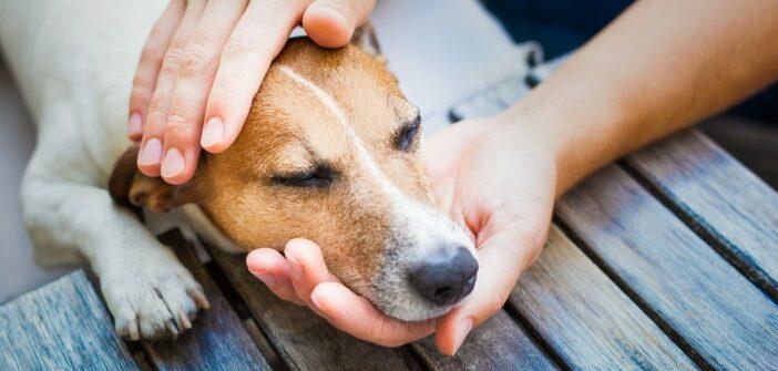 Schmerzen beim Hund erkennen