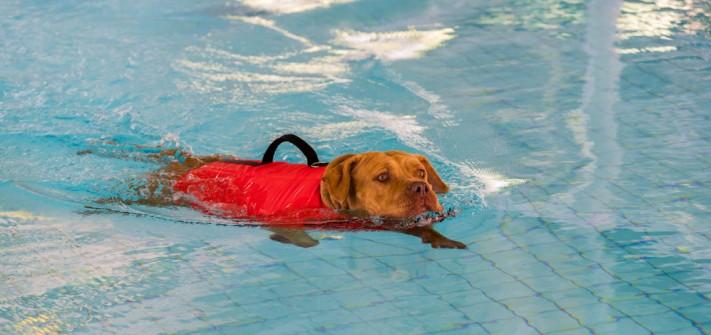 Verzeichnis Hundephysiotherapeuten in Deutschland