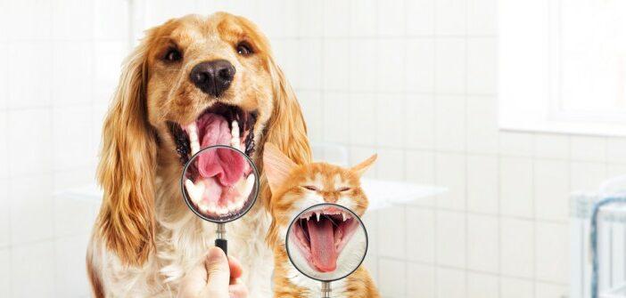 Hund stinkt: alles über Zahnstein entfernen, Zahnreinigung, Mundgeruch beim Hund