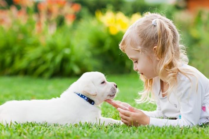 Oft wird der weibliche Hundename Luna aber für eine kleinere Hündin gewählt. (#01)