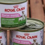 Royal Canin Nassfutter Starter Mousse Mother & Babydog und Royal Canin Mini Junior im Test