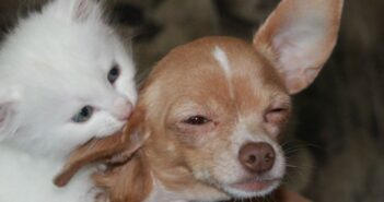 Tierfreundschaften seit 25 Jahren: Fressnapf feiert Jubiläum