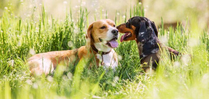 ZERGportal: Hundevermittlung mit Herz