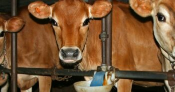 Bodenbelag für Kuhstall: Welcher Bodenbelag im Stall?