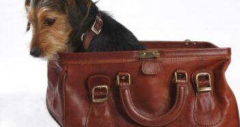 Reisen mit Hund: Tipps für den richtigen Futternapf im Hundeurlaub