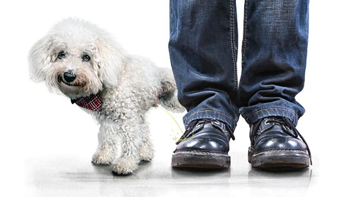 Durchfall Beim Hund Wenn Der Hund Dauernd Durchfall Hat