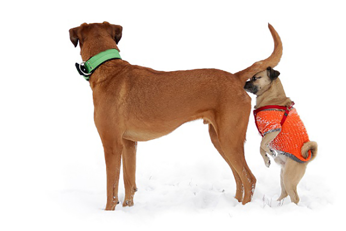 Die obigen Rezepte eignen sich hervorragend zur Beruhigung des Darms, es gibt aber auch Nahrungsmittel für die Versorgung mit Mineralien und Vitaminen, die ein Hund bei Durchfall schnell verliert. (#06)