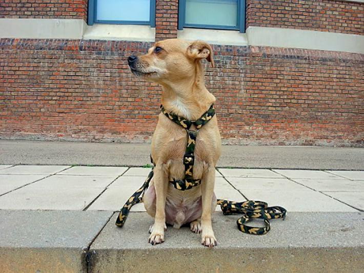 Leidet der eigene Hund an Durchfall, kann das verschiedene Ursachen haben. (#07)