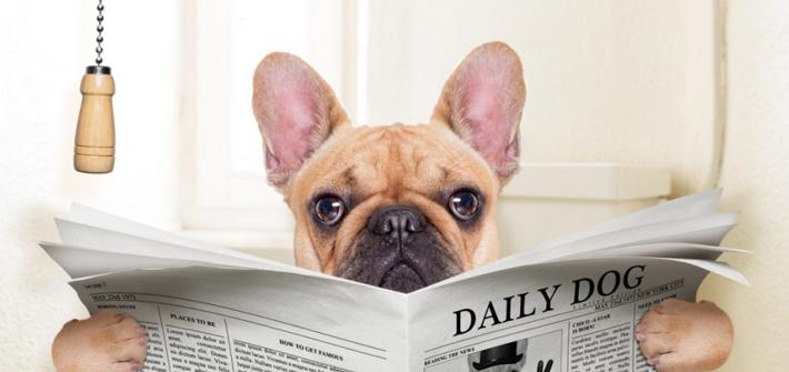 Durchfall beim Hund: Wenn der Hund dauernd Durchfall hat