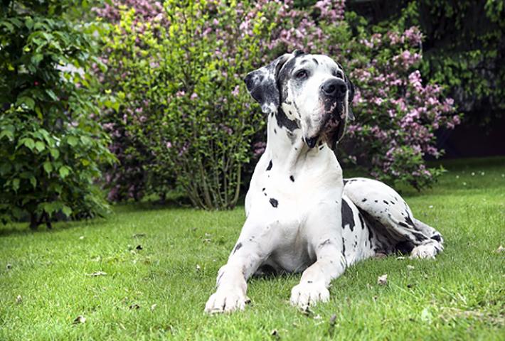 Barfen ist eine Herausforderung für den Halter, denn der Hund muss mit allen wichtigen Nährstoffen versorgt werden. (#02)