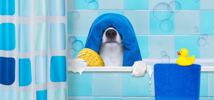 Hundegeruch aus Wohnung entfernen: diese Tipps helfen