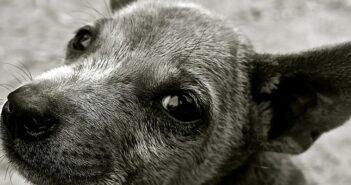Giardien beim Hund: Ursachen, Symptome und Behandlung