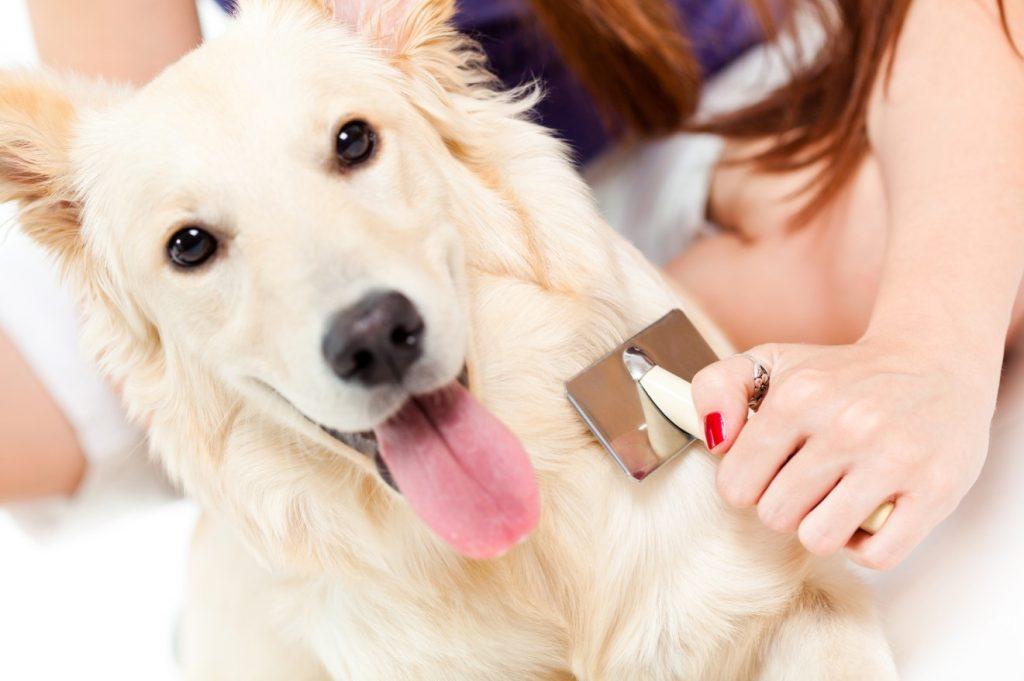 Gegen Hundehaare in der Wohnung hilft vor allem das regelmäßige Kämmen und Bürsten des Fells der Fellnase. (#1)
