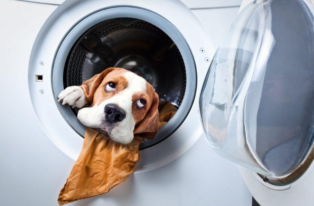 Die Fellnase in der Waschmaschine - das geht natürlich gar nicht. (#3)