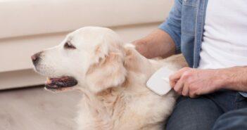 Hundehaare entfernen: 8 Tipps, die wirklich funktionieren