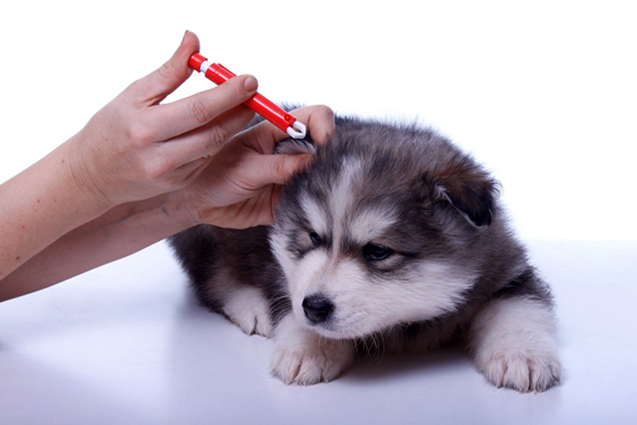 Viele Hundebesitzer schwören auf die diversen Methoden, mit denen Zeckentiere auf natürliche Art bekämpft werden können. (#3)