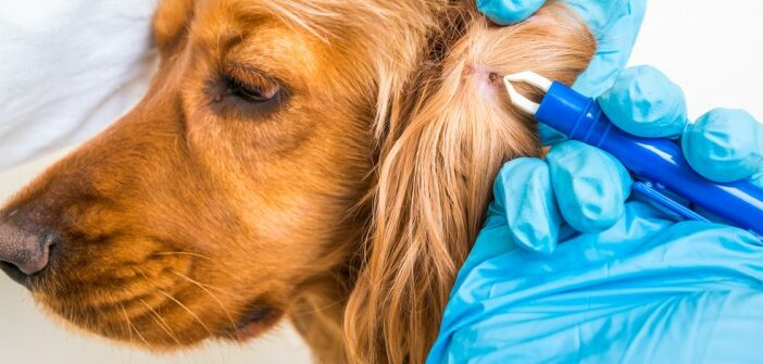 Zeckenabwehr: Zeckenschutz beim Hund von A bis Z