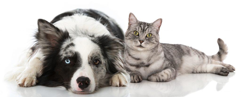 Hund und Katze: Sind Hunde wirklich besser als Katzen? (#01)