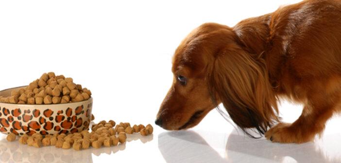Hundefutter wechseln: Wie wechselt man das Hundefutter?