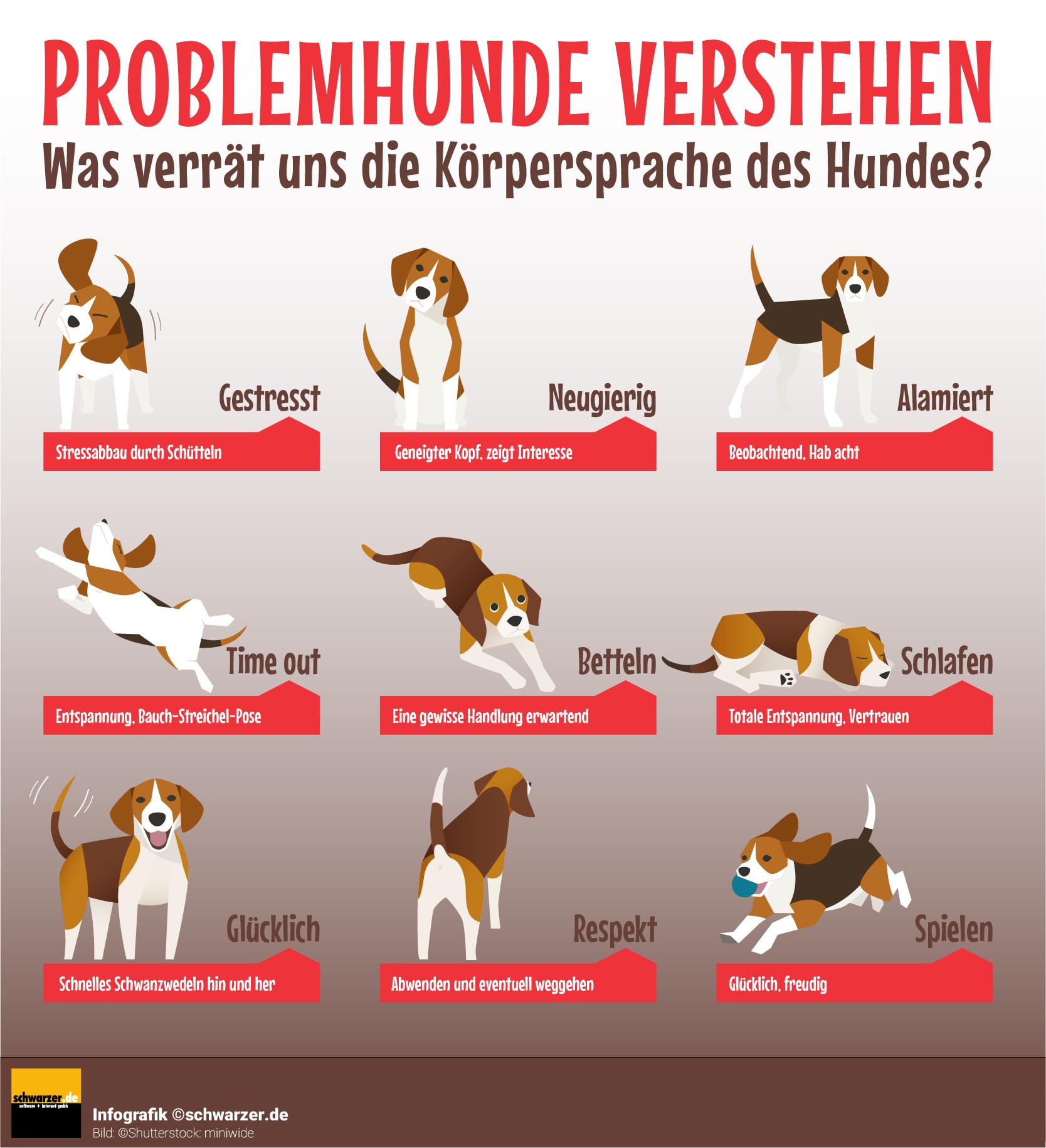 Infografik: Körpersprache von Hunden verstehen