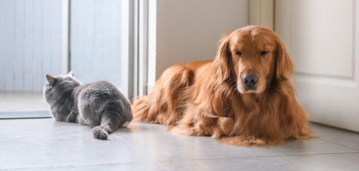 Warum Hunde besser sind als Katzen