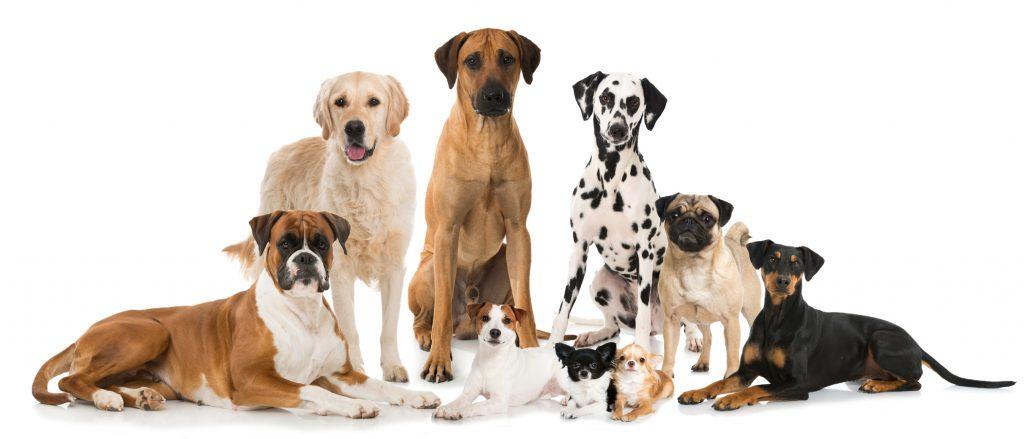 Hundesteuer ist unabhängig von Größe und Rasse - einzige Ausnahme: manche Kampfhunderassen. (#1)