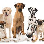 Warum Hundesteuer zahlen?