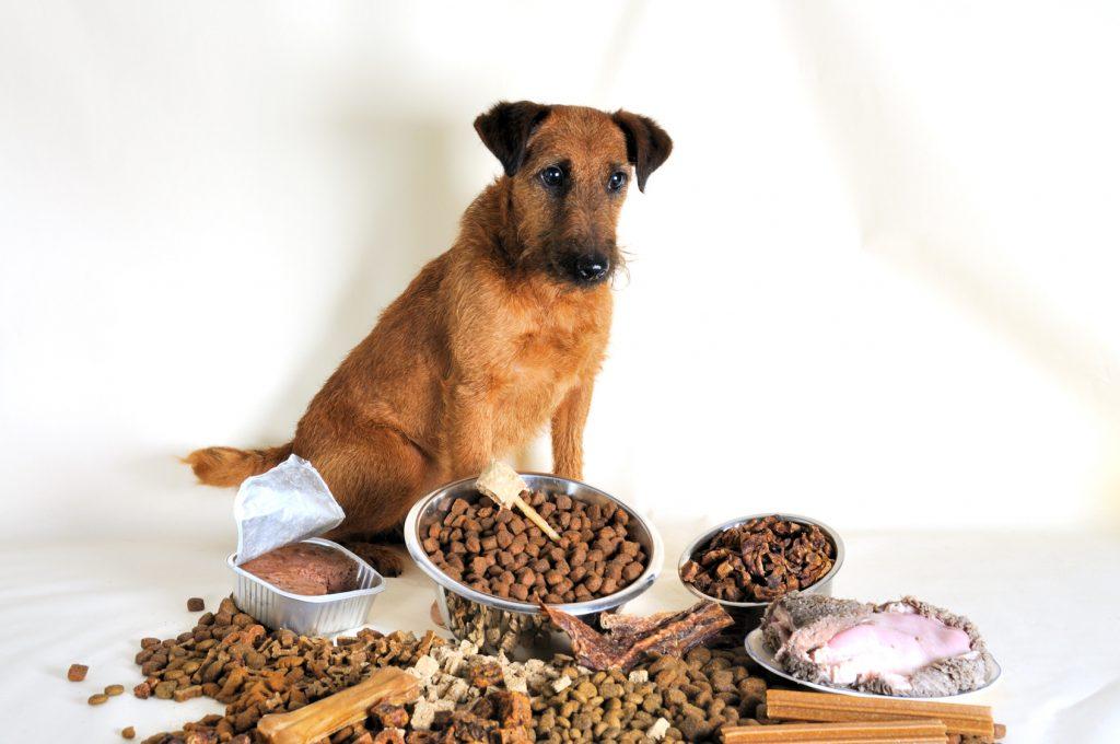 Wie wechselt man am Besten das Hundefutter? (#01)
