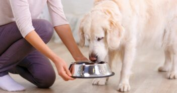 Hundefütterung – Häufigkeit und was es zu beachten gibt