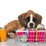 Wie Hundefutter lagern?