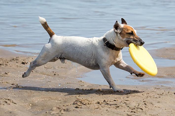 Welches Hundefutter ist gut für Hunde? (#01)