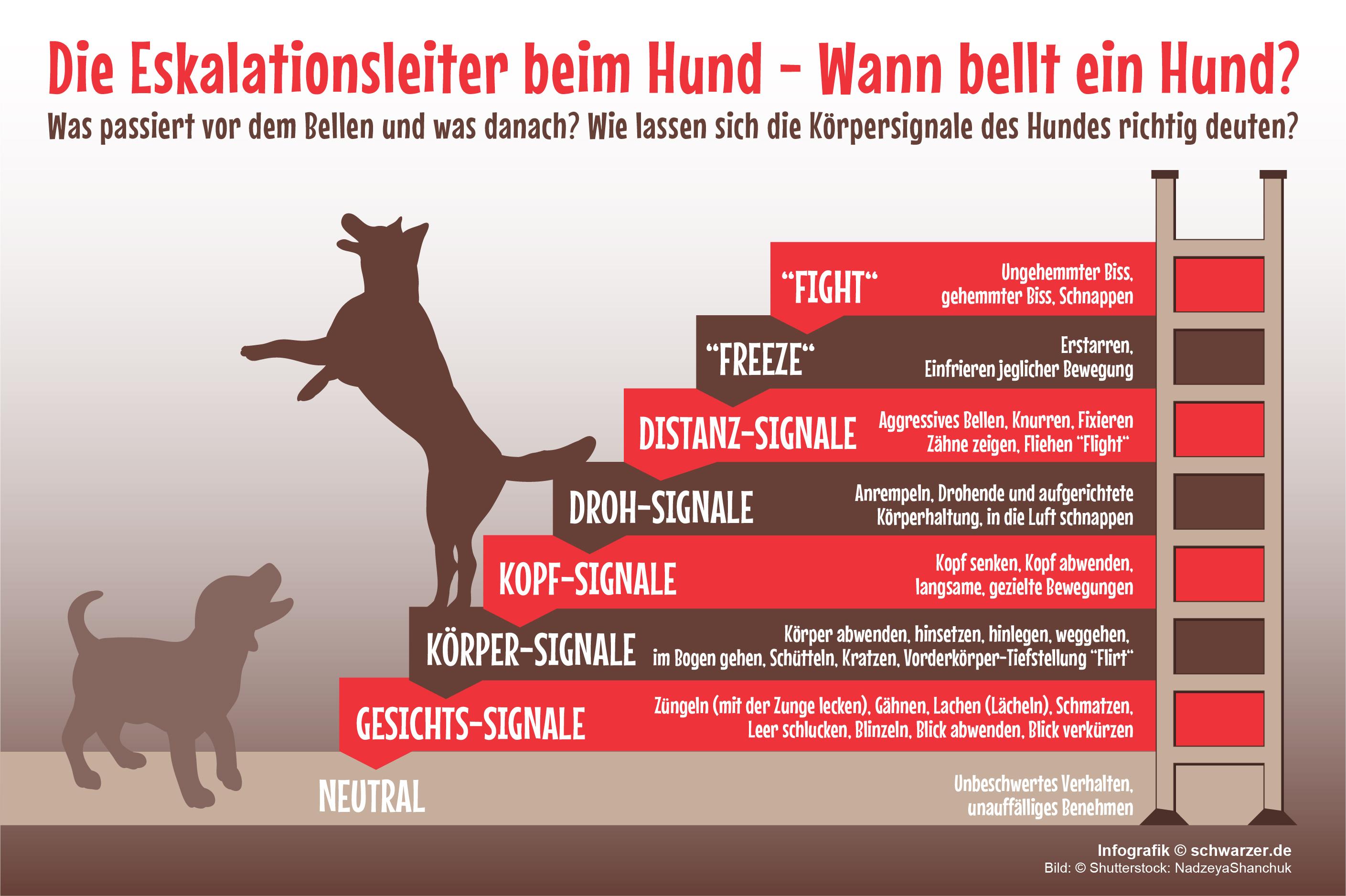 Infografik: Wann bellt ein Hund - die Eskalationsleiter verstehen