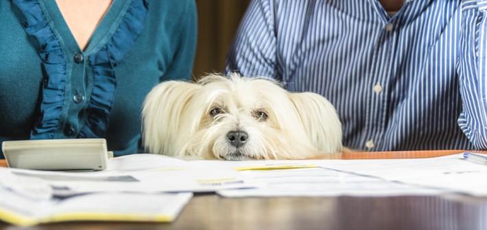 Warum Hundesteuer zahlen