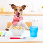 Hundefutter: Was ist gut