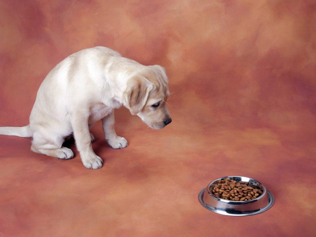 Haltbarkeit vom Hundefutter? Kann man sich auf die Nase des Hundes verlassen?
