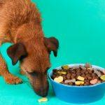 Hundefutter – wie lange haltbar?