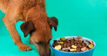 Hundefutter - wie lange haltbar?