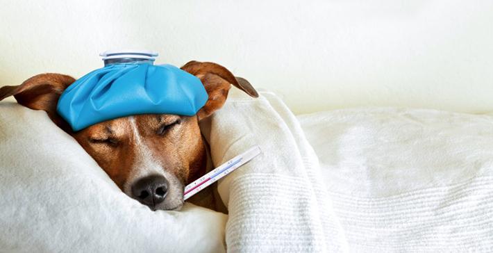 Die Hundekrankenversicherung: Ob diese nötig sind, hängt vom persönlichen Anspruch ab. (#03)