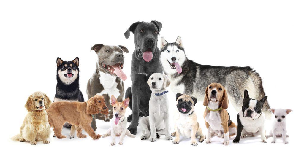 Nicht alle Hunderassen sind bei allen Versicherungen gerne gesehen - besser vorher informieren. (#02)