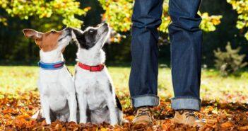 Mehrhundehaltung: Tipps, wenn der Zweithund einzieht