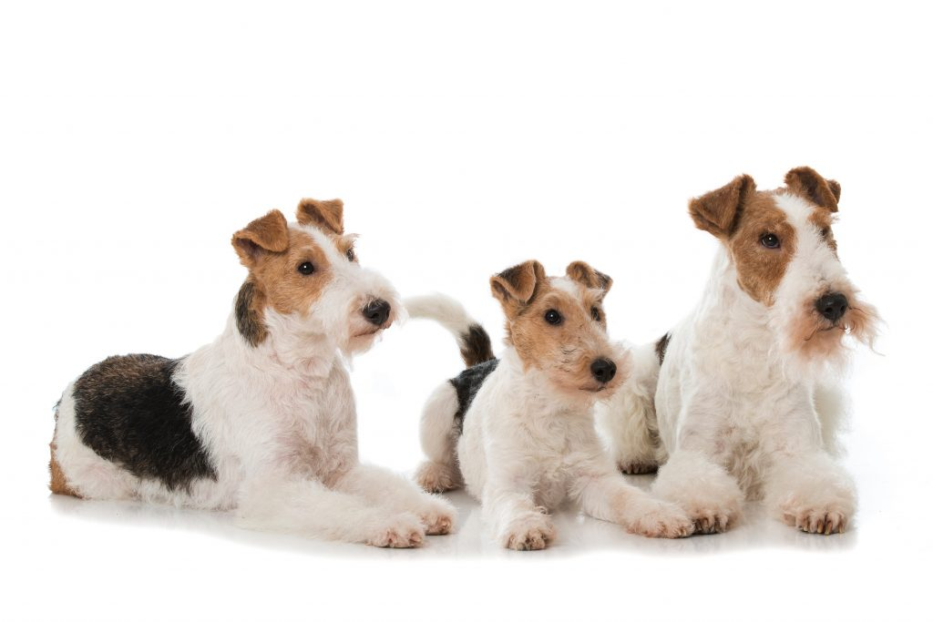 Mehrhundehaltung: Hier ist es wohl ne kleine Hundefamilie